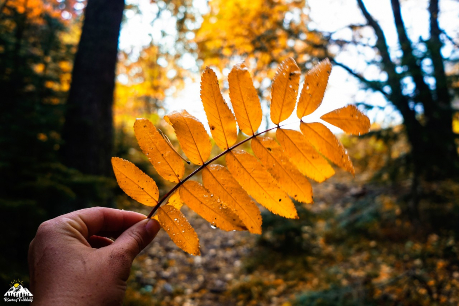 Природный Парк Большой Тхач, Адыгея. Осень