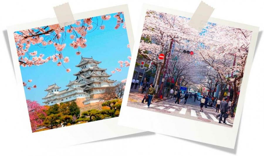 Что вы знаете про Японию?